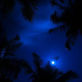 Jenny Rainbow - Magic of the Night Sky