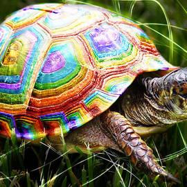 Nicole  Miinch  - Magic Rainbow Turtle