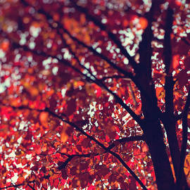 Kim Fearheiley - Magical Autumn
