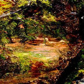 Marie Jamieson - Magical Forest - Myth - Fantasy