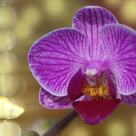 Rumyana Whitcher - Magical Orchid