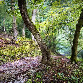Debra and Dave Vanderlaan - Magical Trail