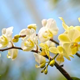 Sonali Gangane - Magnificient Blossoms
