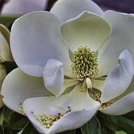 Brian Wright - Magnolia