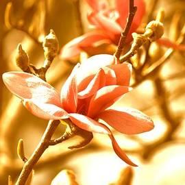 Sonali Gangane - Magnolia Dreams