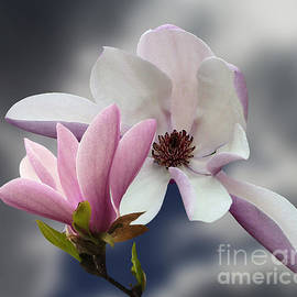 Andrew Govan Dantzler - Magnolia Flowers