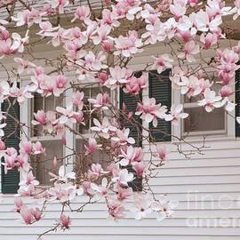 Ann Horn - Magnolia in Bloom
