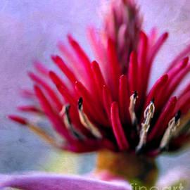 Judi Bagwell - Magnolia in Technicolor