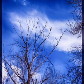 Omaste Witkowski - Majestic Bald Eagle in a Dramatic Sky