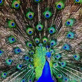 Karen Wiles - Majestic Blue