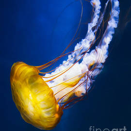 Michael Ver Sprill - Majestic Jellyfish
