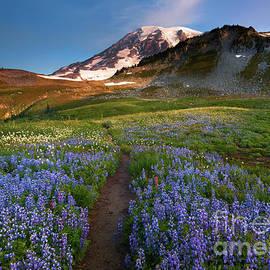 Mike Dawson - Majestic Trail