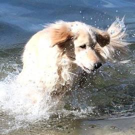 Sue Chisholm - Making A Splash