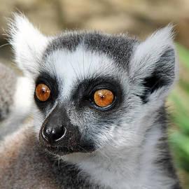 Sergey Lukashin - Malagasy lemur