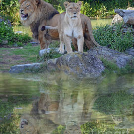 Jim Fitzpatrick - Male and Female Lions by a Lake