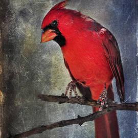 Barbara Manis - Male Cardinal