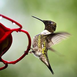 Christina Rollo - Male Hummingbird On Feeder