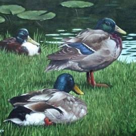 Martin Davey - Mallards On River Bank