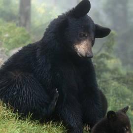 Daniel Dempster - Mama Bear Baby Bear - FS000225