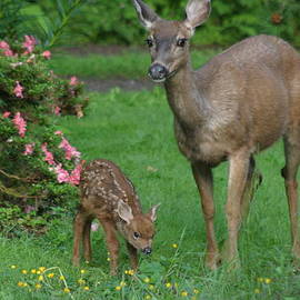Kym Backland - Mama Deer And Baby Bambi