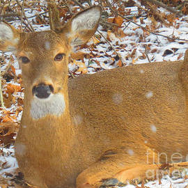Shelly Weingart - Mama Deer Taking a Snow Day