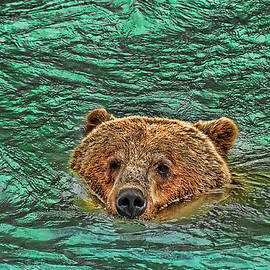 Allen Beatty - Mama Grizzly going for a Swim