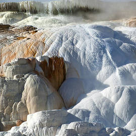 Wildlife Fine Art - Mammoth Hot Spring Terraces