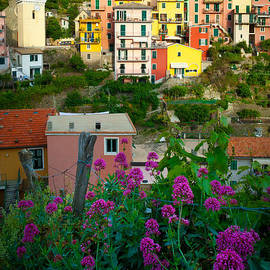 Inge Johnsson - Manarola Flowers and Houses