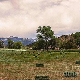 Janice Rae Pariza - Mancos Colorado Landscape II