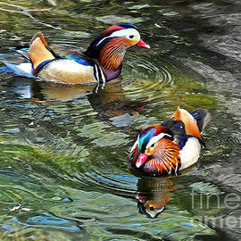 Lydia Holly - Mandarin Ducks