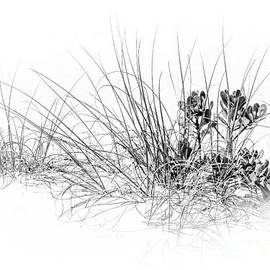 Marvin Spates - Mangrove and Sea Oats-bw