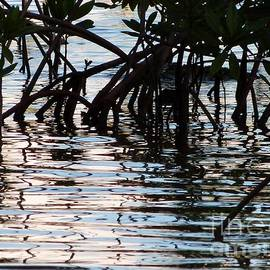 Amar Sheow - Mangrove Swamp