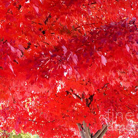 Gardening Perfection - Maple Canopy