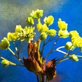Alexander Senin - Maple In Bloom