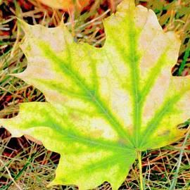 Sonali Gangane - Maple Leaf
