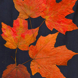 Joan Hartenstein - Maple Leaf Tag II