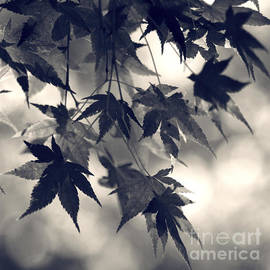 Sylvia Cook - Maple leaves in black and white- one