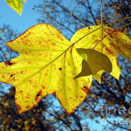 Nina Silver - Maple Leaves in Sunlight