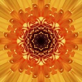 Nancy Pauling - Marigold  Kaleidoscope