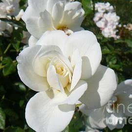 Mary Gonzales Brhel - Mariposa Blanca