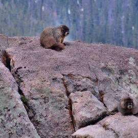 Dan Sproul - Marmot Love