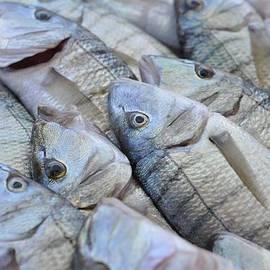ML Jones - Marseille Fish Market