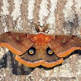 Al Powell Photography USA - Marvelous Moth