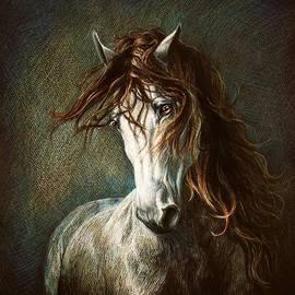 Heidi Carson - Marwari Horse