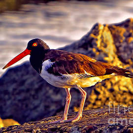 Gary Holmes - Matching Lipstick and Eyeliner - American Oystercatcher