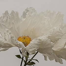 Lee Kirchhevel - Matilija Poppy White on White