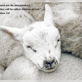 Dawn Currie - Matthew 5 9