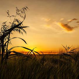 Svetlana Sewell - Meadow Sunset