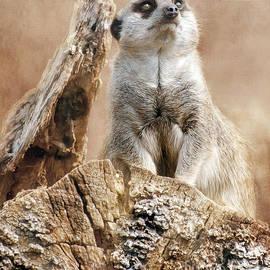 Linsey Williams - Meerkat On A Mount