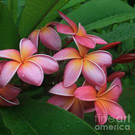 Sharon Mau - Melia Hae Hawaii Pink Tropical Plumeria Keanae